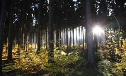 NP de Harz